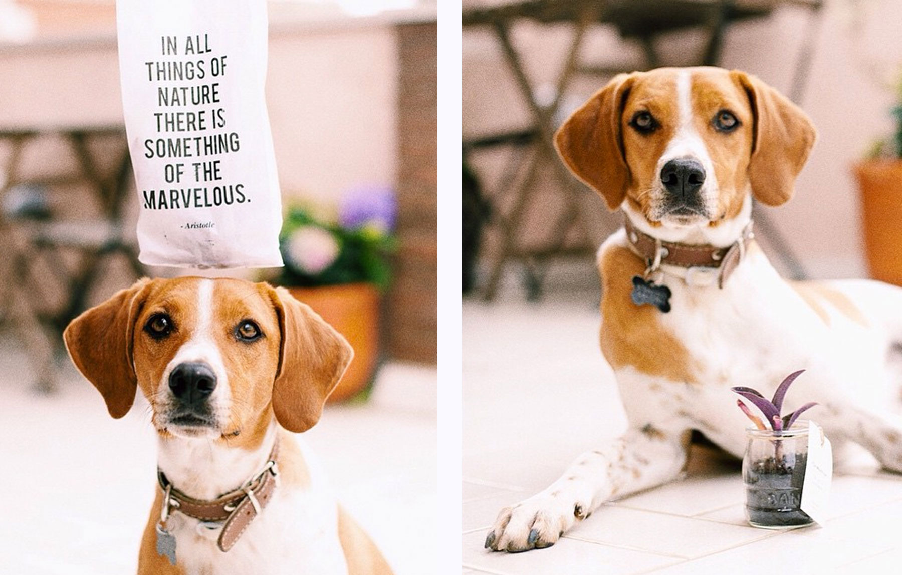 publicacion giving nature perro planta mensaje
